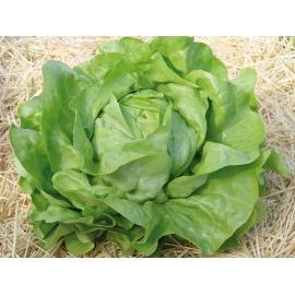 Salata verde Touareg